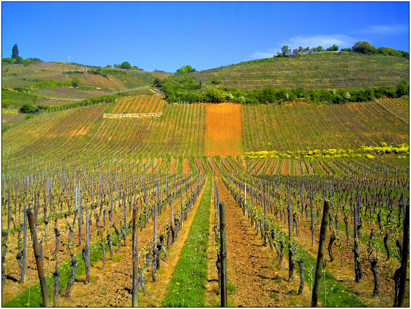 April_Patina_Vosges_Die_Vogesen_France_-_Master_Alsace_magic_Elsaß_Photography_2014_Color_de_Vins_-_panoramio