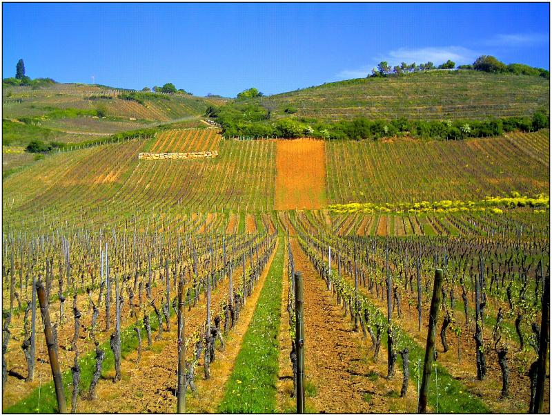April_Patina_Vosges_Die_Vogesen_France_-_Master_Alsace_magic_Elsaß_Photography_2014_Color_de_Vins_-_panoramio
